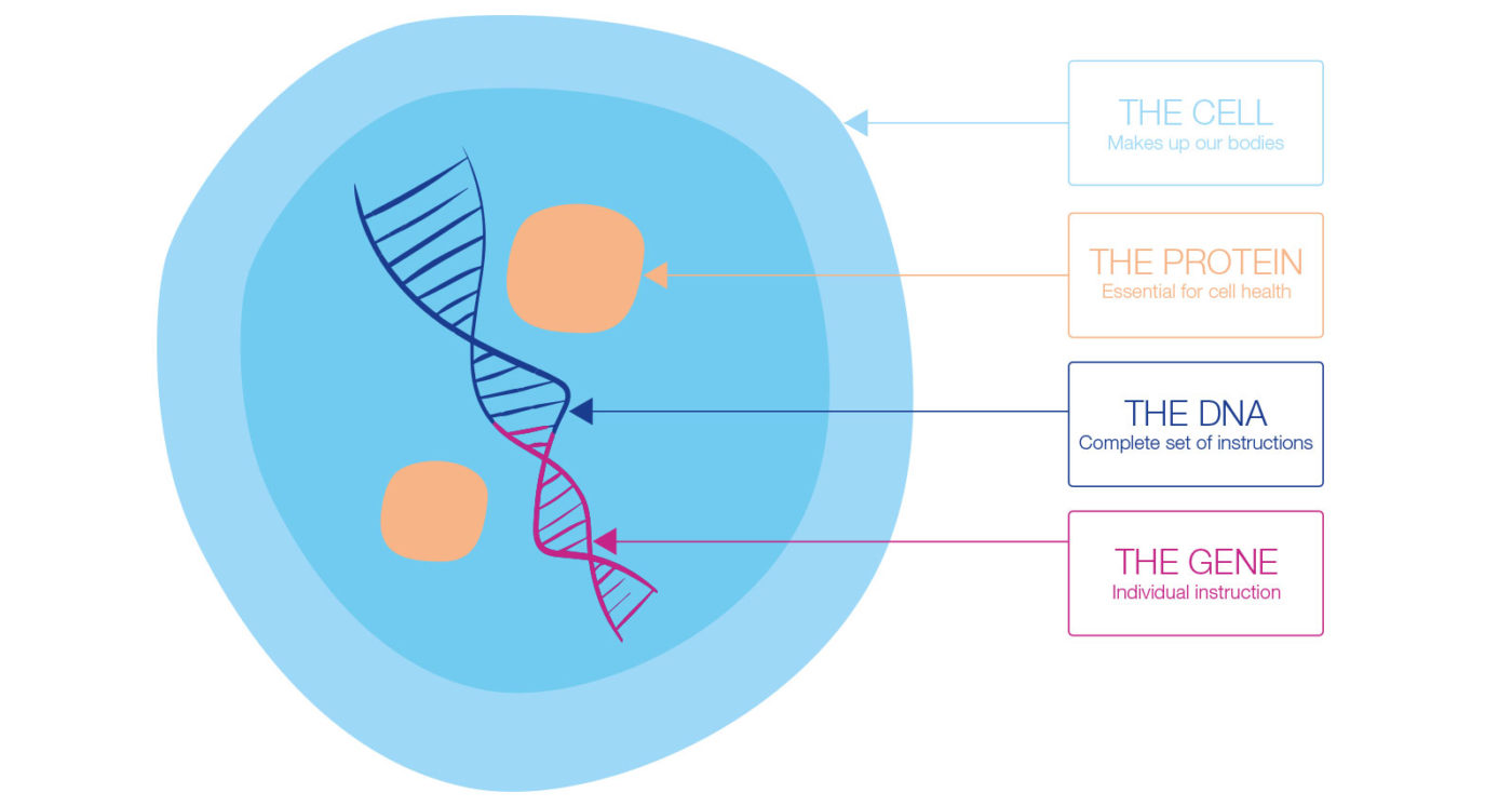 Epigenetics-How-the-cell-works